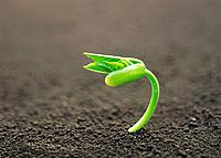 A sprout coming up from ground, high angle view, close up, differential focus, copy space