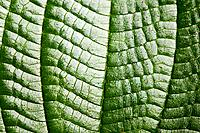 Close up image of a leaf