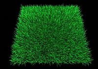 Square patch of grass
