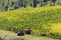 Italy, Tuscany, Harvester in vineyard