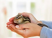 Siberian chipmunk on hand restrictions: Tierratgeber_Bücher / animal guidebooks