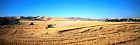 Harvesting grain in the Palouse, eastern Washington
