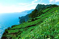 Portugal _ Madeira _ Terrace cultivation