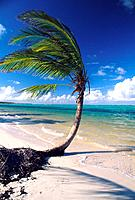 Caribbean _ Dominican Republic _ Punta Cana