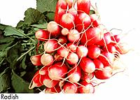 Radish (thumbnail)
