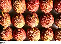 Litchi