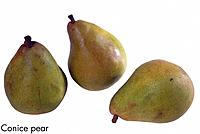 Conice pear