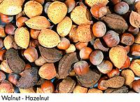 Walnut _ Hazelnut