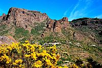 Spain _ Canary Islands _ Great Canary _ Ayacata Road