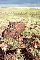 USA _ National Park _ Petrified Forest
