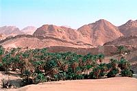 Tunisia _ The South _ Montain Region _ Tozeur _ Chebika Oasis