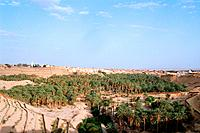 Tunisia _ The South _ Chott el Jerid Region _ Nefta _ Corbeille Oasis