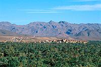 Morocco _ South _ Drâa Valley _ Agdz