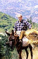 Greece _ Crete _ Old man on a donkey _ Kritsa Surroundings