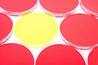 Yellow petri dish among red (thumbnail)