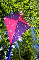 Kite in tree (thumbnail)