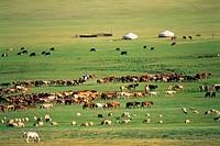 Arkhangai Province,Mongolia