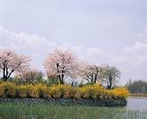 Ilsan Lake Park,Ilsan,Goyang,Gyeonggi,Korea