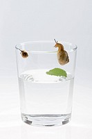 Snail Escaping from Jar, close_up