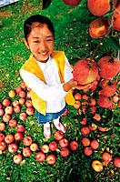 Korean Girl in the Apple Orchards