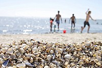 Germany, Lower Saxony, Butjadingen, beach, swimmers, blur, foreground, mussels, series, North Sea
