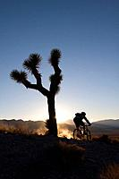 A silhouette of a biker by a Joshua Tree at sunset near Lone Pine in California