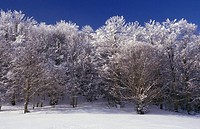 Landscape, trees, snow, Florina, Macedonia West, Greece