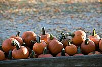 usa, Iowa, Madison County, winter_set, hay cart, pumpkin_harvest, autumn