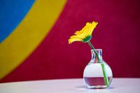 Glass_vase, yellow flower, close_up