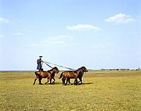 Hungary, Hortobagy Puszta, rider_games, shepherd, horses stands, rides, no models Hortobagypuszta, riding_show, presentation, people, release, Puszta,...