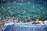 Seagulls and shovel in landfill. Cantabria. Spain