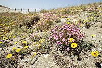 Punta de los Muertos. Parque Natural de Cabo de Gata-Nijar. Almería. Spain