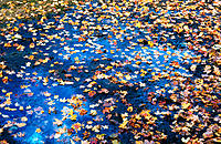 Water puddles with autumn leaves in dried-up pond