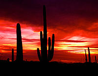 Organ Pipe Cactus National Monument. AR. USA