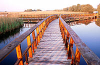 Tablas de Daimiel National Park. Ciudad Real province. Spain