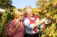 Seniors, actively, hiking, vineyard, autumn, Brixen, South_Tyrol, Italy,