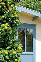 Apple tree and garden house