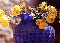 Yellow roses in a vase