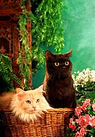 two cats in basket _ next to flowers