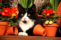 domestic cat _ lying between flowers