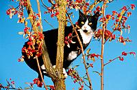domestic cat _ standing on tree