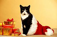 Christmas : domestic cat sitting in Santa Claus cap