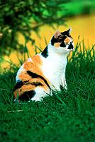 domestic cat _ sitting on meadow