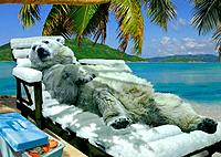 polar bear on deck chair on the beach / Ursus maritimus