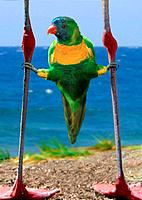 lory between flamingo legs