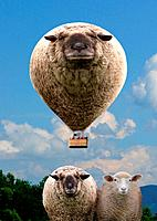 sheep as hot_air balloon