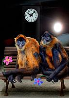 two monkeys _ sitting on bench