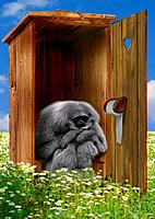 monkey _ sitting on toilet