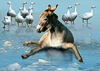 donkey on ice