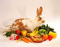 dwarf rabbit between food
